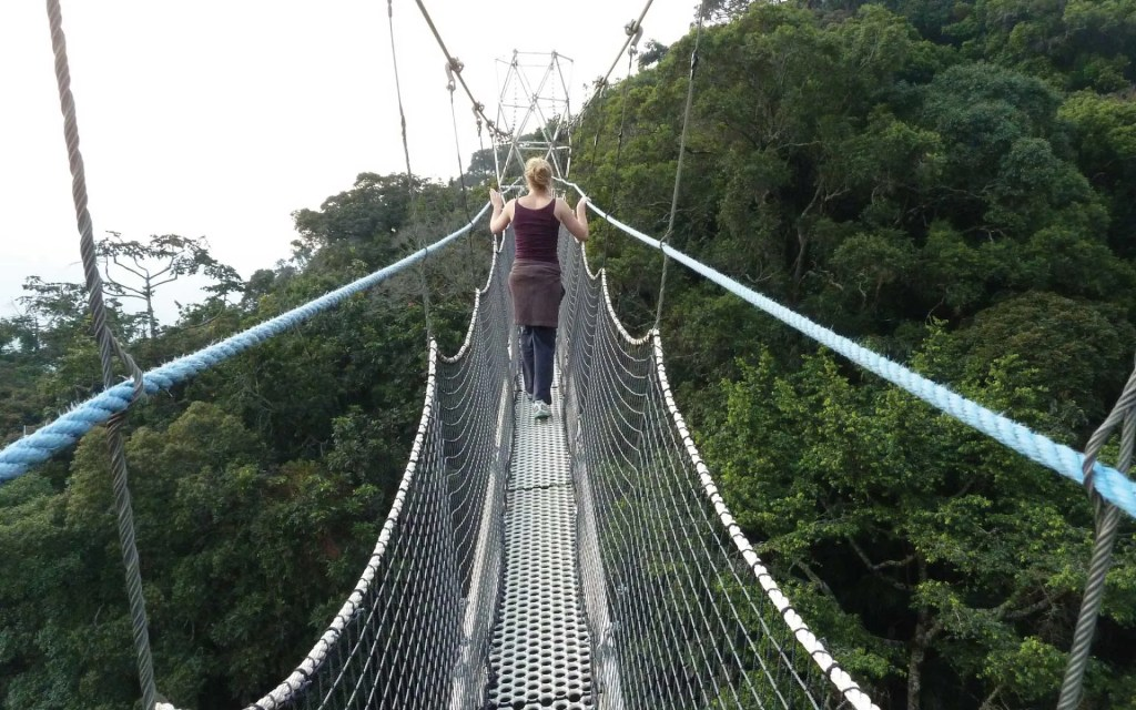Nyungwe Forest National Park Canopy