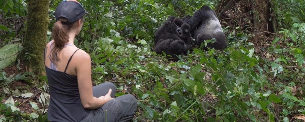 Gorilla trekking permit Booking Information for Bwindi, Uganda and Rwanda