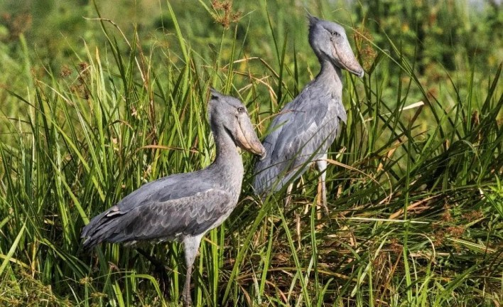 12 Best Birding Spots in Uganda