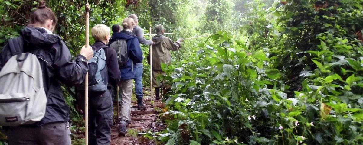 Walking Safari Across Bwindi Forest