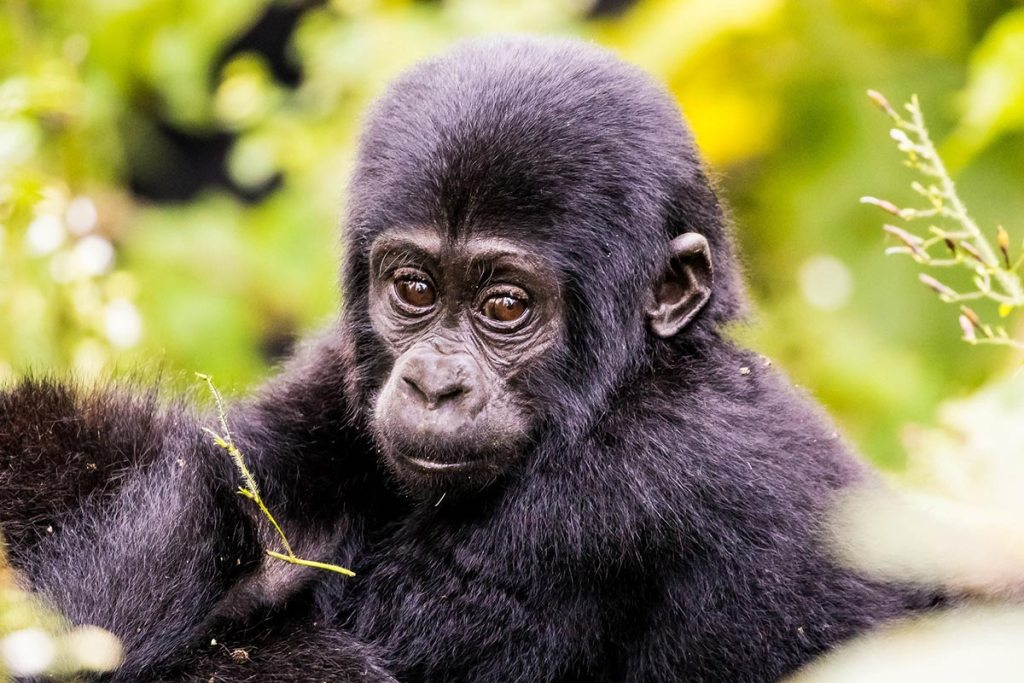 3 Days Bwindi Gorilla Trekking Safari - Fly to Bwindi