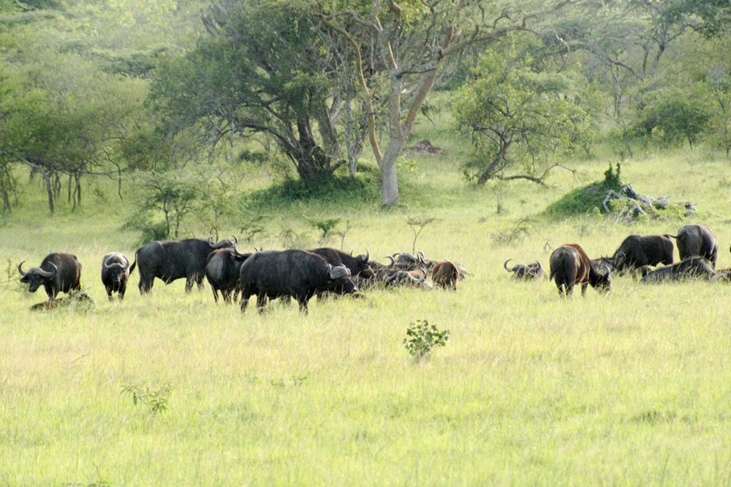 Lake Mburo Safari