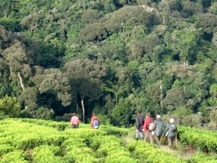 compare gorilla trekking Uganda Rwanda tracking tours