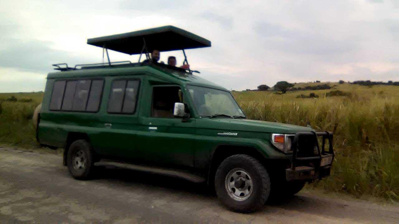Gorilals and Wildlfe Sadaris gorilla tracking wild safari Uganda Rwanda primate tours