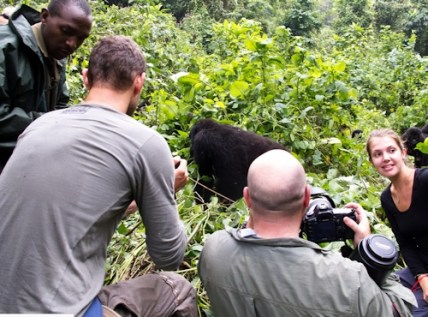 Uganda gorilla safari gorilla tour  - seeing mountain gorillas in Biwindi