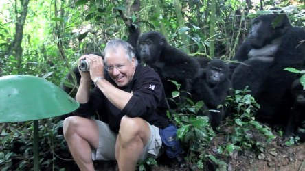 touched by gorilla habituation experience
