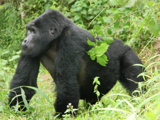 Gorilla trek tour prices and costing comparison