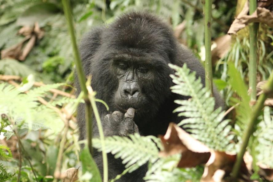 Best Time To Visit Uganda, When To Go For Gorilla Trekking Safari