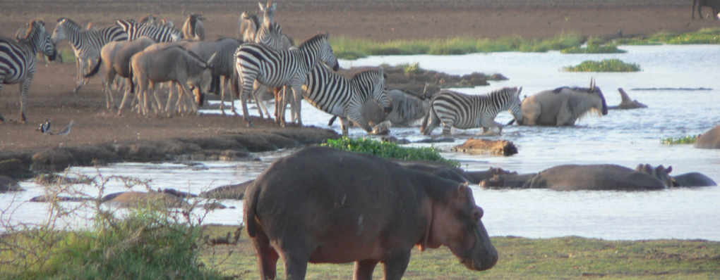 Lake Manyara, Serengeti Wildlife and Gorillas Trek - Tanzania Uganda Gorillas, BIG 5 Wildlife in Serengeti , Manyara-  10 Days Safari gorillas wildlife