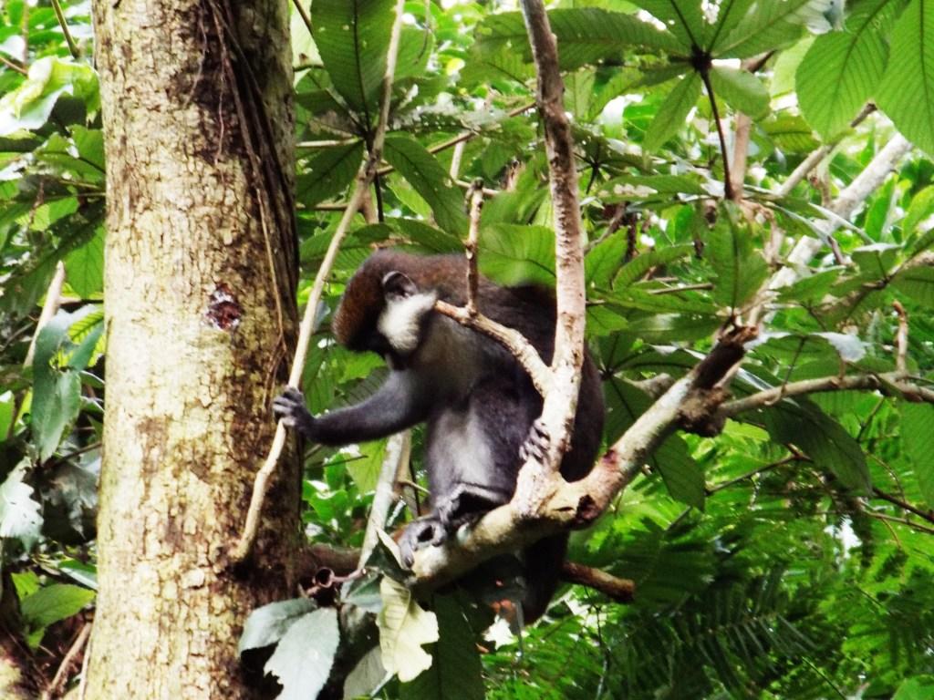 2 days gorilla trek uganda budget gorilla safari