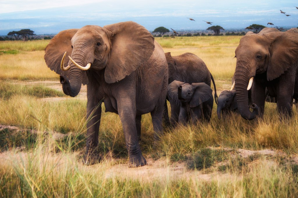 uganda kenya safari - mara gorilla trek uganda tour