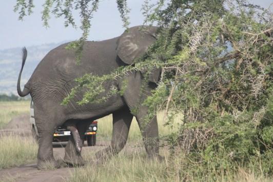 10 Days Jungle Uganda Safari