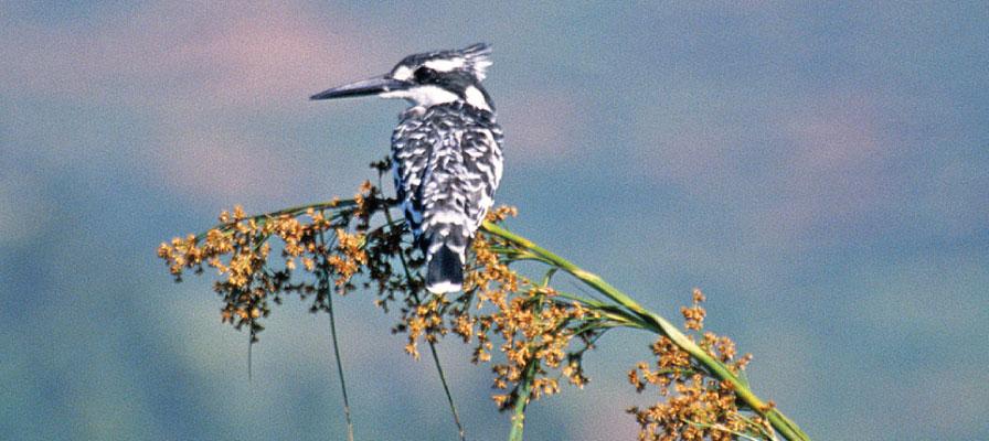 Uganda Wildlife Safari - Beautiful Uganda, Birding in Lake Bunyonyi, Uganda Safaris