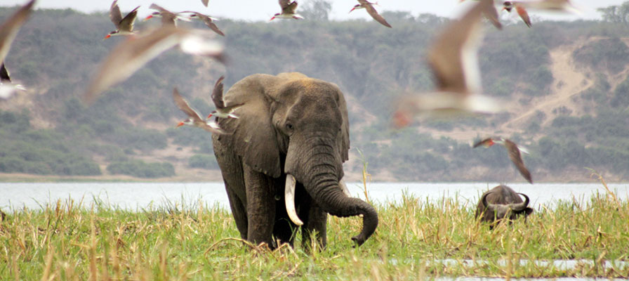 7 Days Lake Mburo, Bwindi Gorilla Tracking, Bunyonyi Birding & Queen Elizabeth