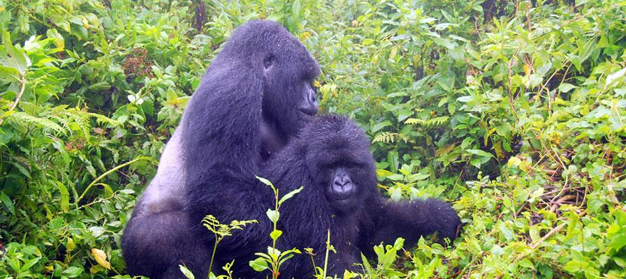 15 day uganda safari