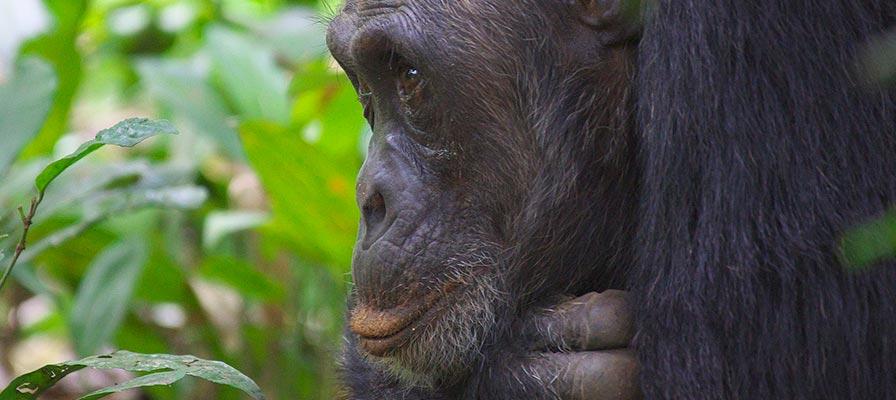 Kibale Forest National Park Safari