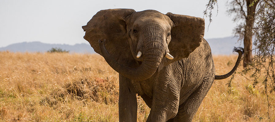 Kidepo Valley National Park Wildlife Safari