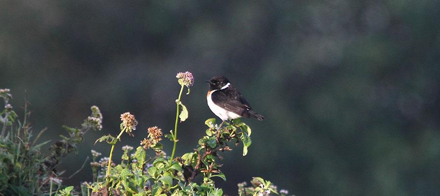 Queen Elizabeth and Lake Bunyonyi Birding Safari