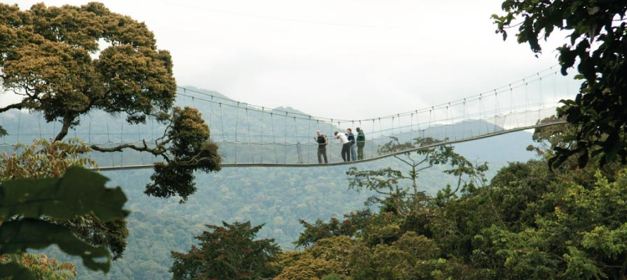 Nyungwe Forest National Park Canopy Walk