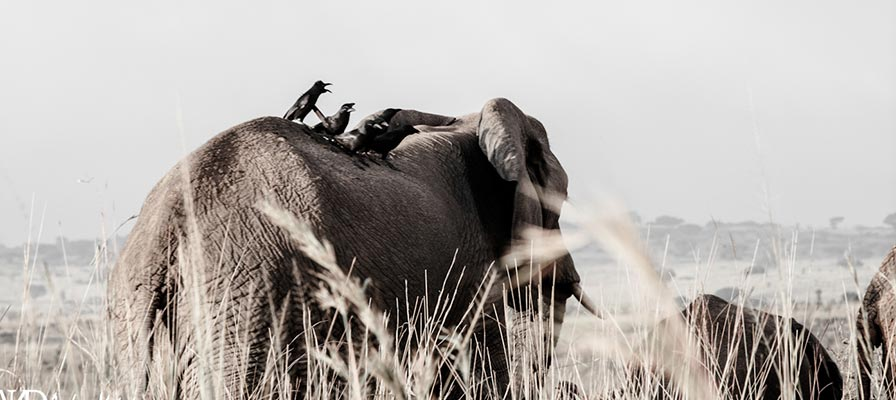 Uganda Rwanda Wildlife Safari Adventure, Gorilla Trekking Safari,15 Day Uganda Safari