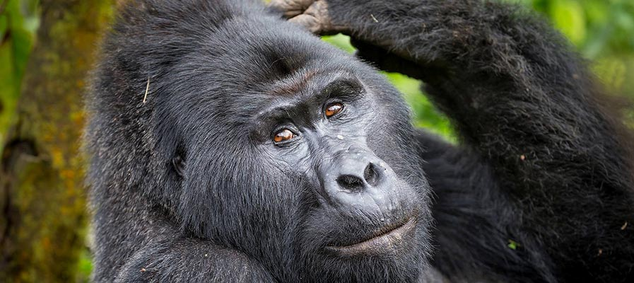 Uganda - Rwanda Gorilla Safari and adventure to remember