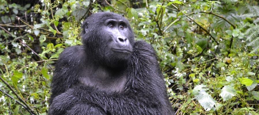 Uganda Rwanda Tour Holiday