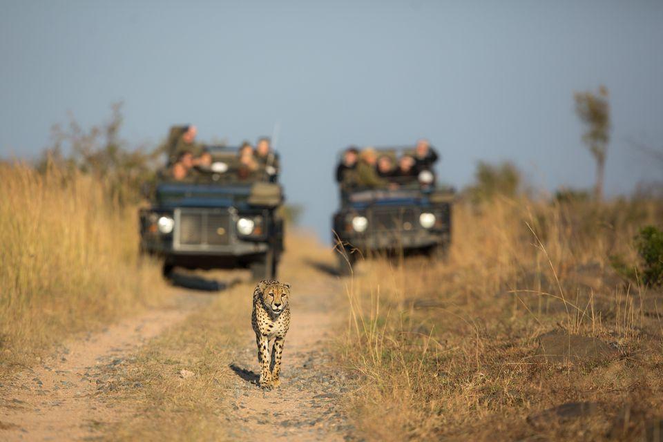 Wildlife Safari Tips in Uganda Africa