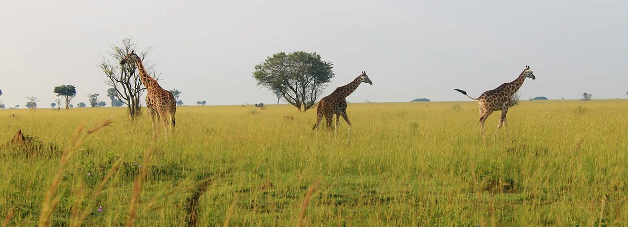 uganda wildlife safari park