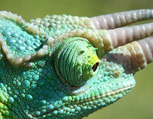 Reptiles in East Africa