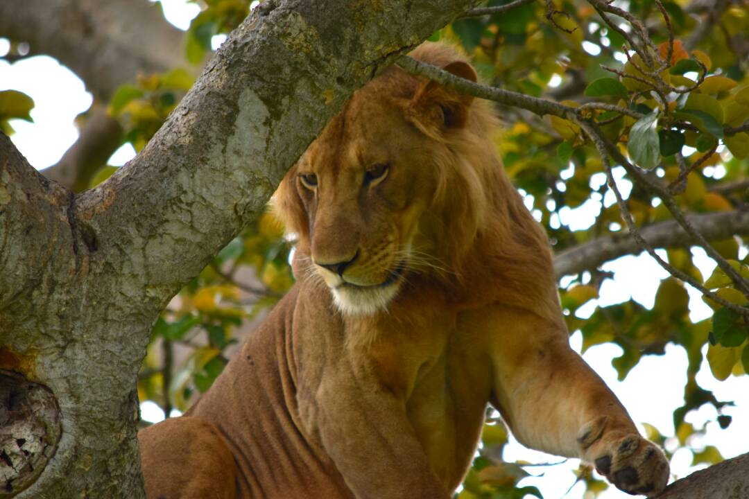 queen elizabeth national park in uganda