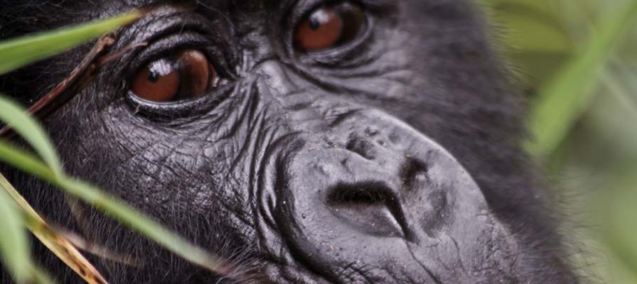 18 Day African Gorilla Tour & Savannah Safari