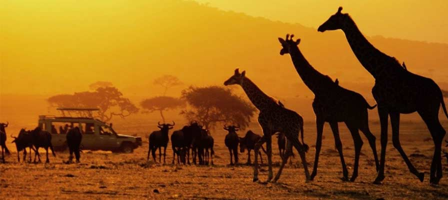 Best Time To Visit Uganda