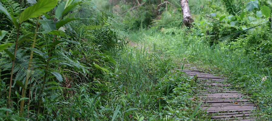 Primate Walk in Bigodi Wetland