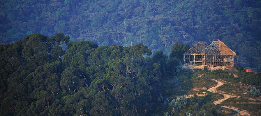 Nyungwe Forest RWanda
