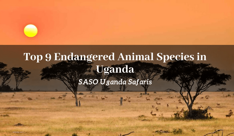 Endangered Animal Species in Uganda