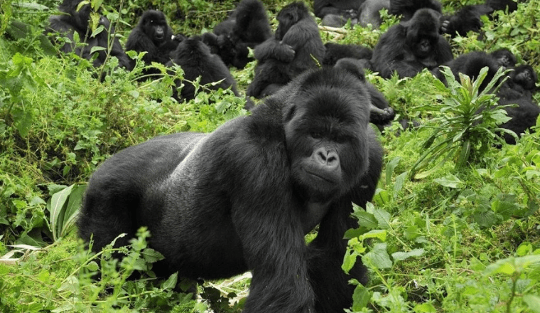 8 Best things About Uganda