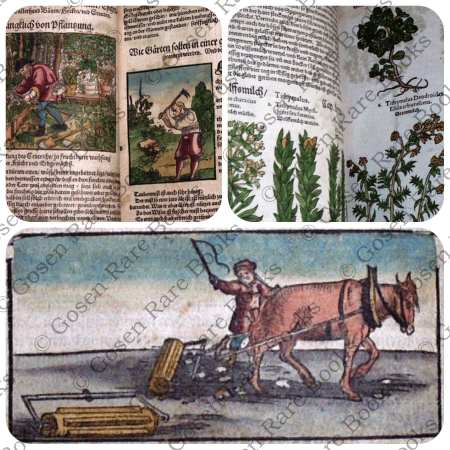 Lonicer's KREUTERBUCH - Hand-Colored -1564