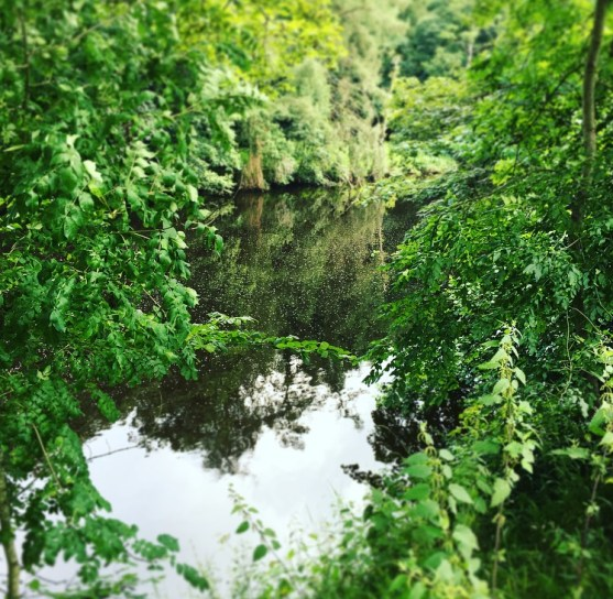 Jungle look river