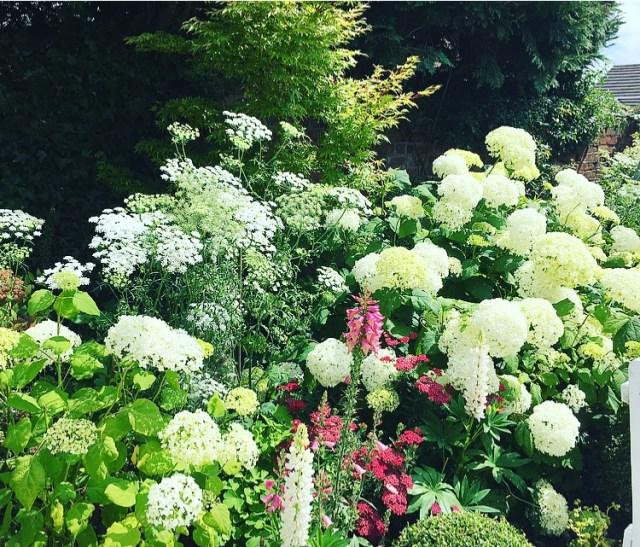 Open garden white