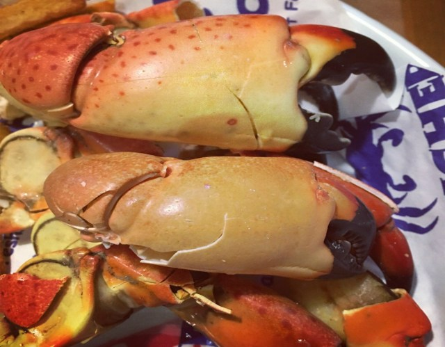 Marco Island Stone crab close up