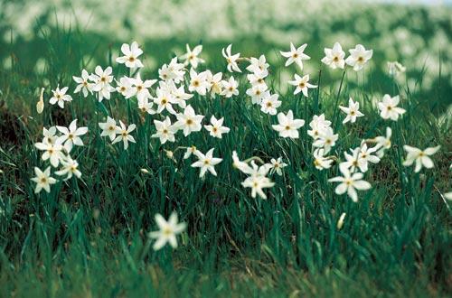 אביב בסלובניה