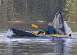 Man in Kayak paddling through jaws of whale