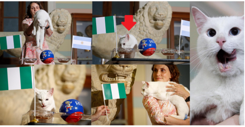 cat889 500x259 - Breaking News: Psychic Cat Predicts Nigeria Will Knock Argentina Out Of The World Cup