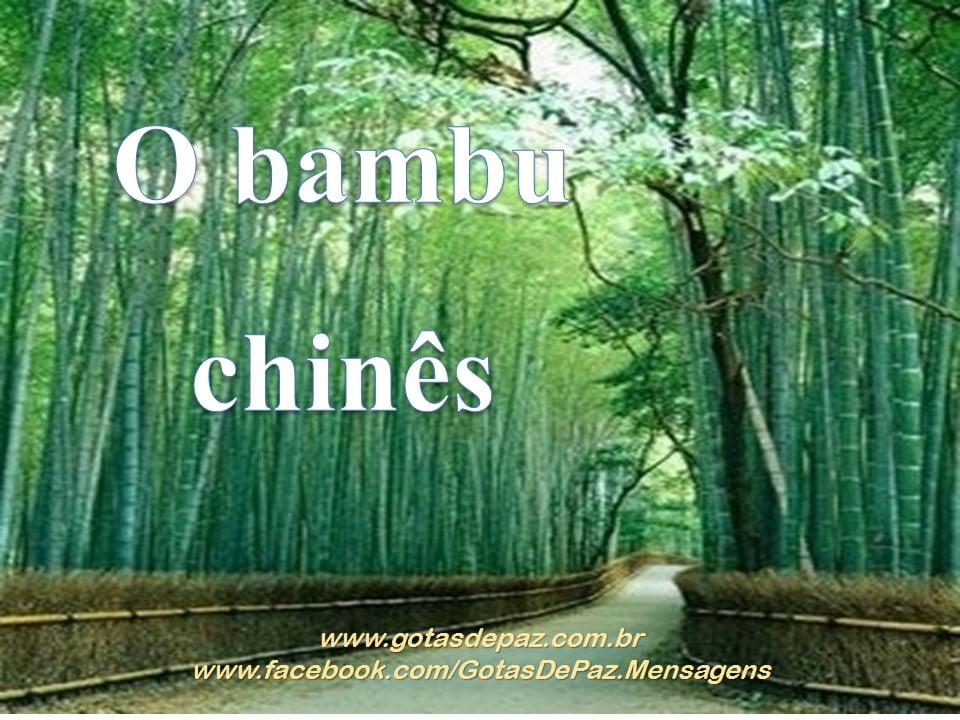O bambu chinês