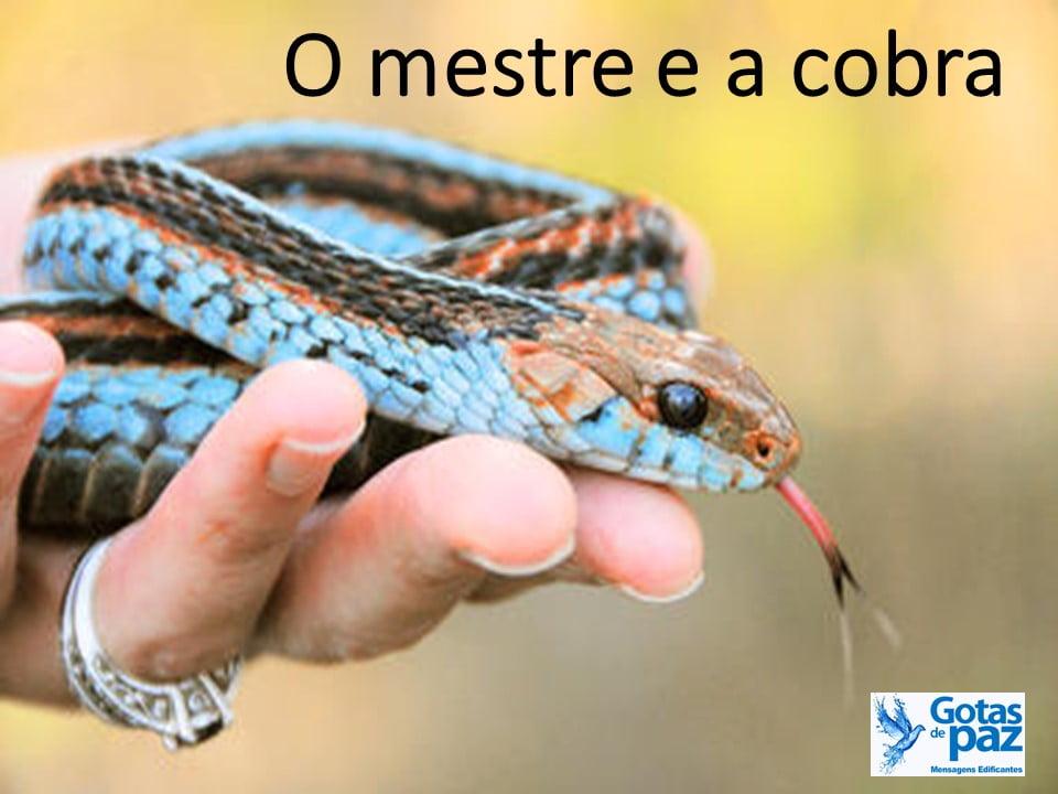 O mestre e a cobra