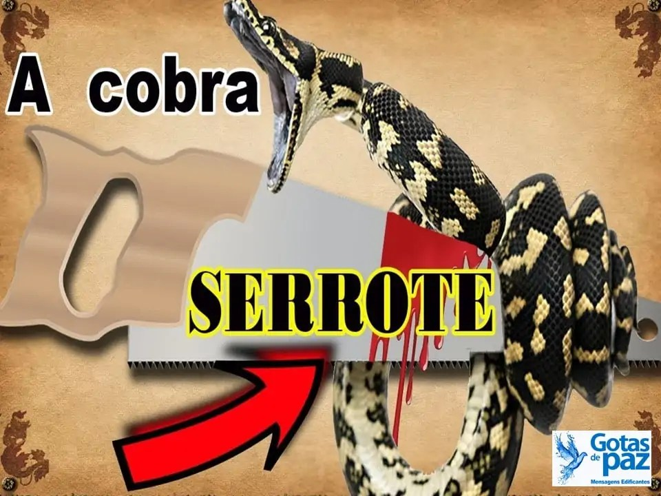A cobra e o serrote