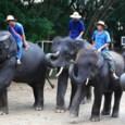 בכפר הפילים בפאטיה תוכלו לפגוש עדר פילים גדול ולצפות במופעים המדגימים את חיי היום יום של פילים עובדים, אילוף פילים והאכלתם. כמו כן תוכלו, אם עדיין לא מיציתם את הנושא, […]