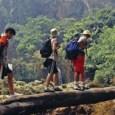 טיולים מודרכים בצפון תאילנד הם אטרקציה טובה המתאימה לכולם. ישנם טיולים בני יום ועד שבוע בדרגות קושי שונות, ויכולים להיות ברגל, בג'יפים על פילים ועוד. טיול יומי לרוב יכלול סיור […]