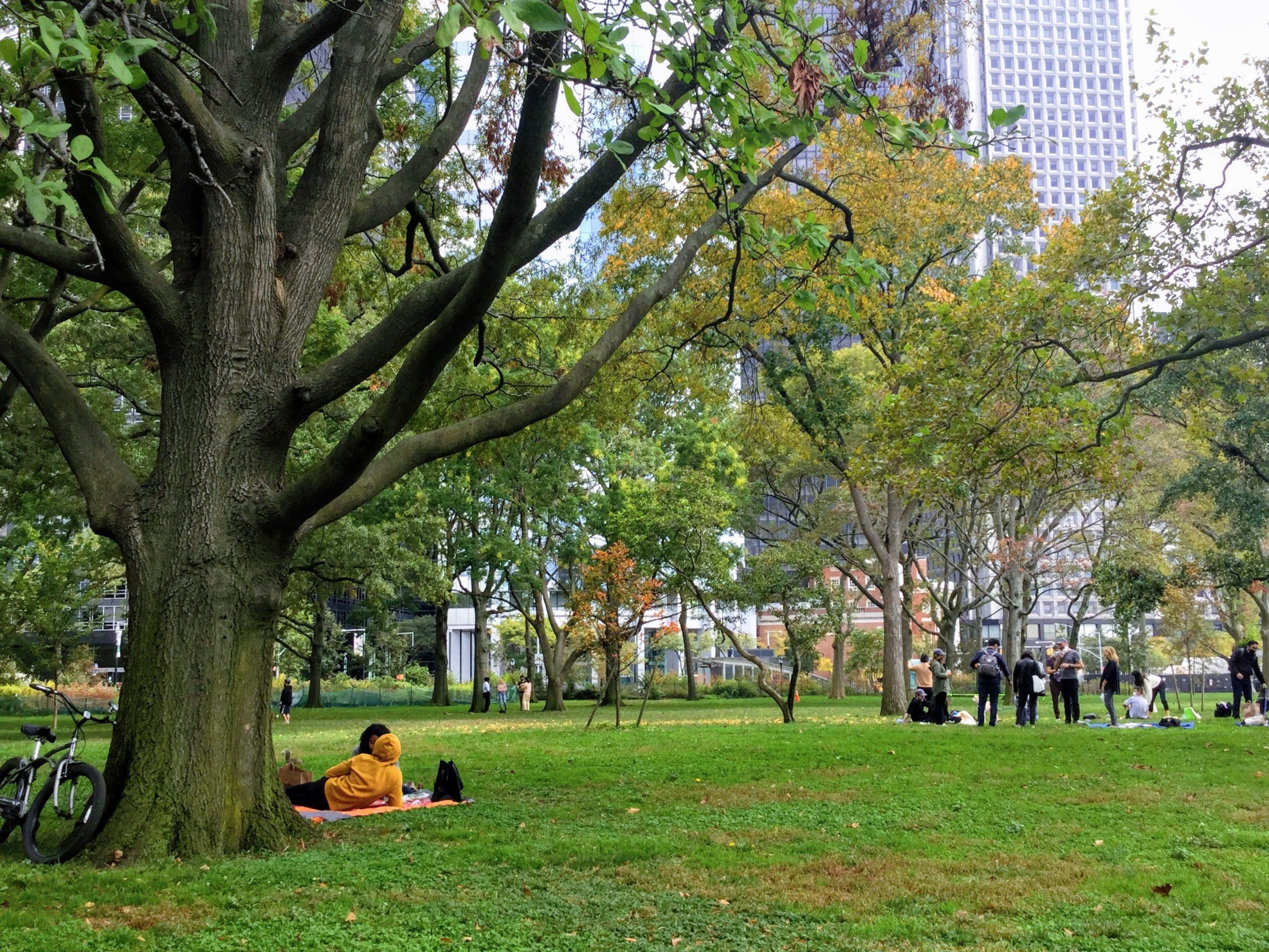 Battery Park grassy field