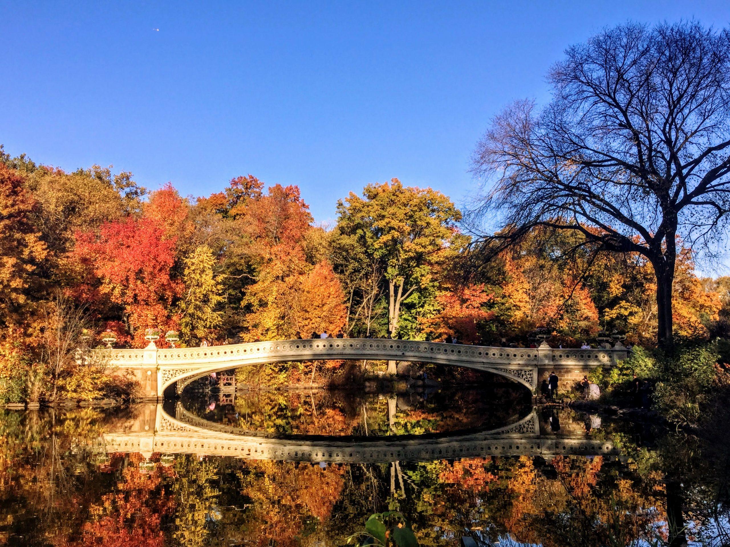 Central Park Fall Foliage